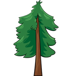 cartoon conifer tree vector image