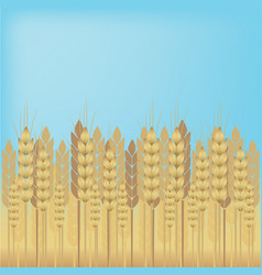 Yellow wheat over blue sky background vector