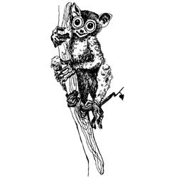 Tarsier monkey vector image