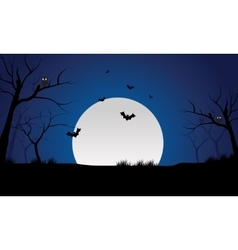 At night bat and full moon scenery silhouette vector image