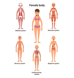 Female body human anatomy skeletal and muscular vector