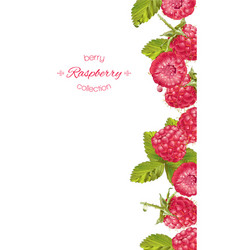 Raspberry vertical banner vector