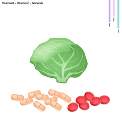 Cabbage with Vitamin K and Vitamin C vector