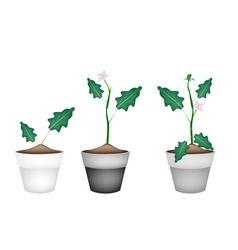 Green Eggplant Tree in Ceramic Flower Pots vector