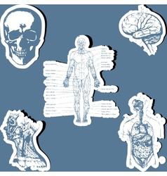 Human anatomy vector image vector image