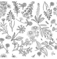 herbs pattern medical plants flowers and herbs vector image