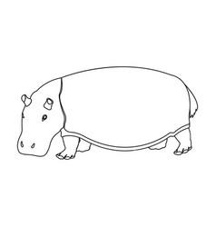 Hippopotamus an omnivorous artiodactyl animal vector