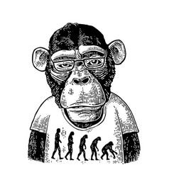 Monkeys in a t-shirt with the theory of evolution vector