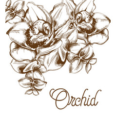Orchid flowers and line art old effect bouquet vector