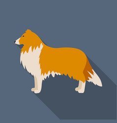 Collie icon in flat style for web vector