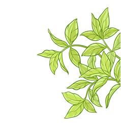 Green tea leaves on white background vector