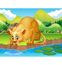 Lion drinking water in the pond vector