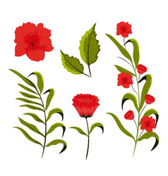 set of beautiful flowers vector image