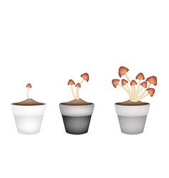 Three Straw Mushrooms in Ceramic Flower Pots vector image