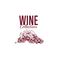 wine shop label cover 5 vector image