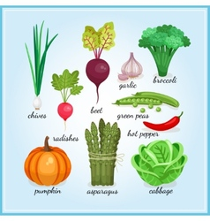 Healthy fresh vegetables icons vector image