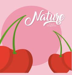 Cherries nature fruit vector