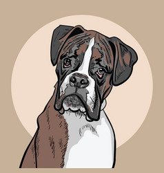 Dog boxer vector