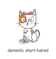 Domestic short-haired Cat character isolated on vector image