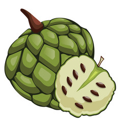green cherimoya cut in half cartoon fruit on vector image