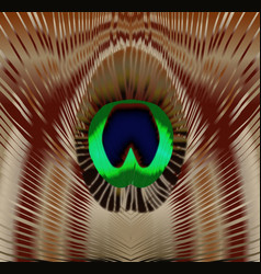 Peacock feather eye vector