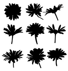 silhouettes drawing daisy flowers vector image