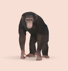 Chimpanzee vector