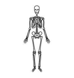 human skeleton icon black color flat style simple vector image