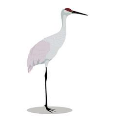 sandhill crane cartoon vector image