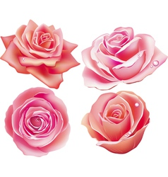 set of four rose vector image
