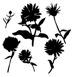 silhouettes of calendula flowers vector image