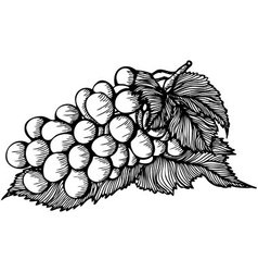 bunch of grapes monochrome drawing vector image vector image