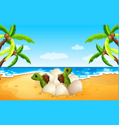 baby sea turtle hatch on the beach vector image