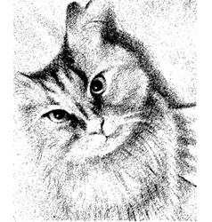 Beautiful cat black and white vector
