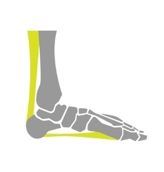 Flat Icon of Foot Bones on White Background vector
