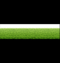 green grass lawn border from fresh grass field vector image
