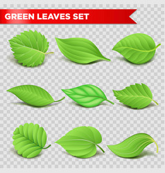 green leaf 3d realistic icons eco environment vector image