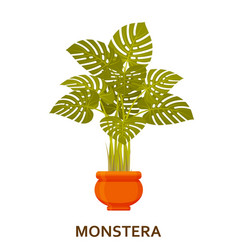 Monstera decorative houseplant in pot florist vector