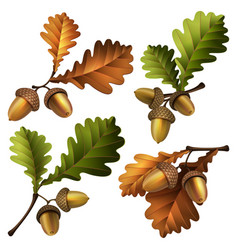 oak branch with acorns and vector image