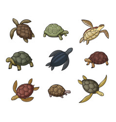 sea turtle animal tortoise and terrapin icons vector image