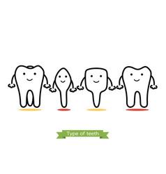 tooth type - incisor canine premolar molar vector image