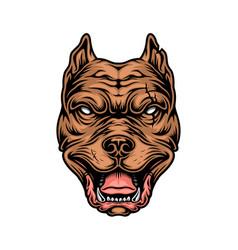 Vintage colorful cruel pitbull head vector