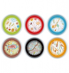 petri dishes vector image