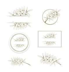 Olive or Argan Oil Vintage Design Collection vector image vector image