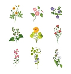 Wild Flowers Hand Drawn Set Of Detailed vector image vector image
