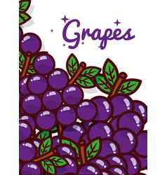 grapes fruit juicy sweet poster vector image