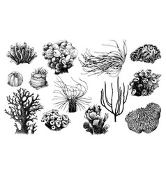 Hand drawn collection corals reef plants vector