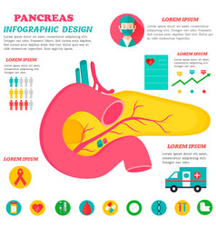 infographic poster with pancreas vector image
