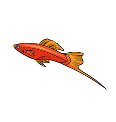 Isolated swordtail aquarium fish vector
