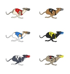 Set of running dog Whippet breed vector